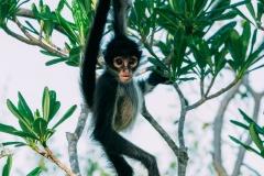 Monkey at Petén, Guatemala