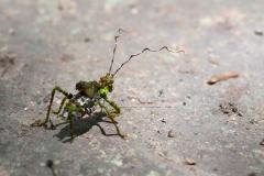 Curioso insecto en Tikal
