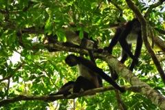 Monkey at El Mirador
