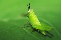 Grillo verde en un mundo verde