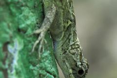 Pequeño lagarto en la corteza de un árbol