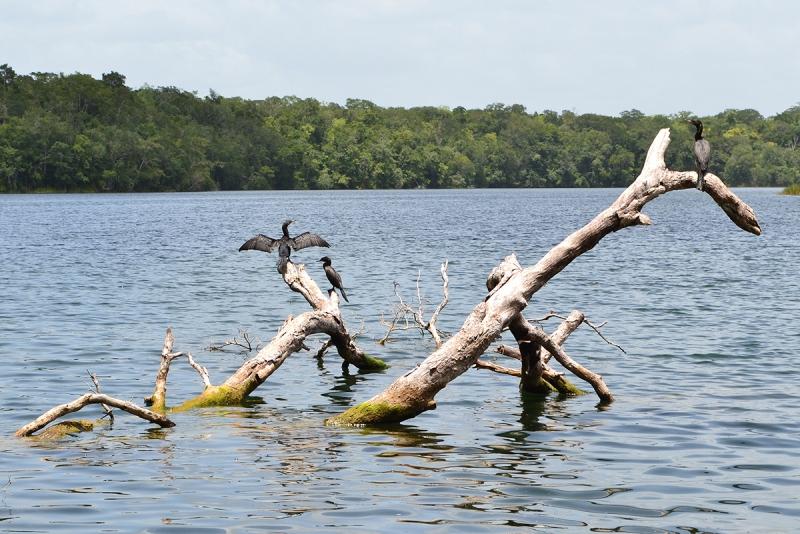 Aves acuáticas en Puerto Arturo