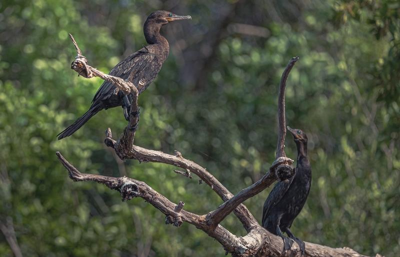 Aves en Puerto Arturo, Petén