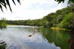 Refugio de Vida Silvestre Puerto Arturo